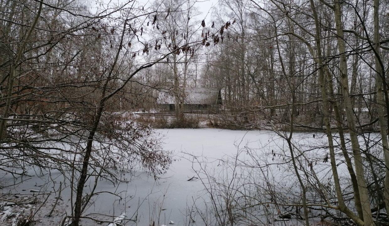 Sejr - en hytte med skov og sø (vinter)