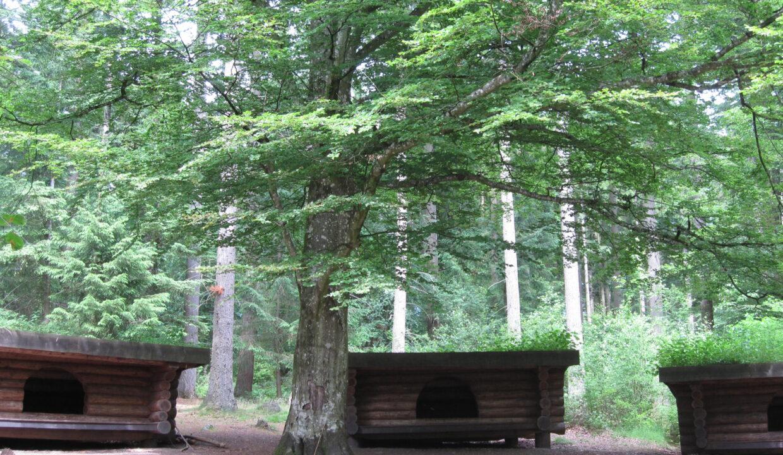 Shelters - Jægerhytten (4)
